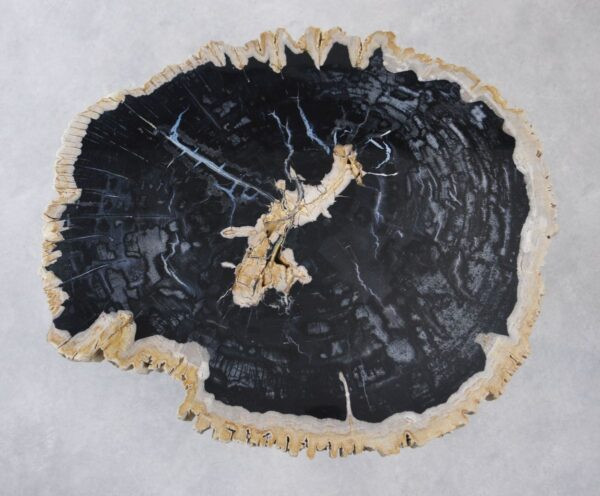Couchtisch versteinertes Holz 35162