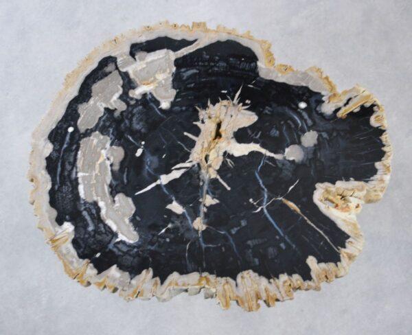 Couchtisch versteinertes Holz 35166