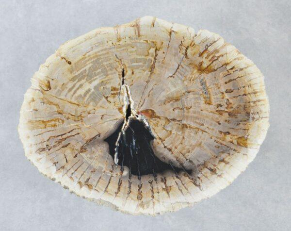 Couchtisch versteinertes Holz 35186