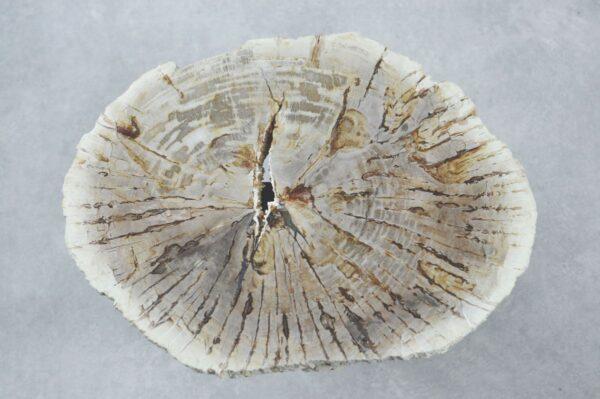 Couchtisch versteinertes Holz 35189