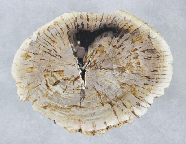 Couchtisch versteinertes Holz 35191