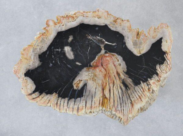 Couchtisch versteinertes Holz 35207