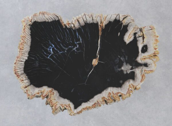 Couchtisch versteinertes Holz 35210