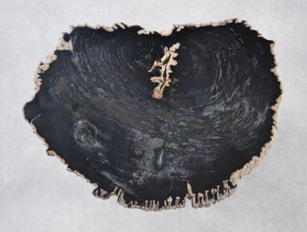 Couchtisch versteinertes Holz 35226