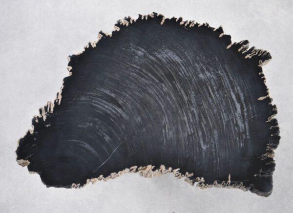 Couchtisch versteinertes Holz 35251
