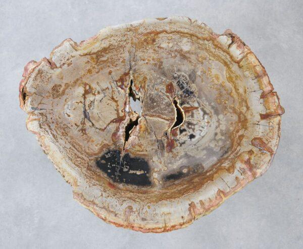 Couchtisch versteinertes Holz 35274