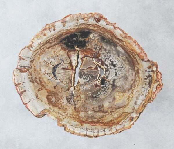 Couchtisch versteinertes Holz 35277