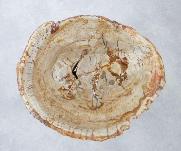 Couchtisch versteinertes Holz 35278
