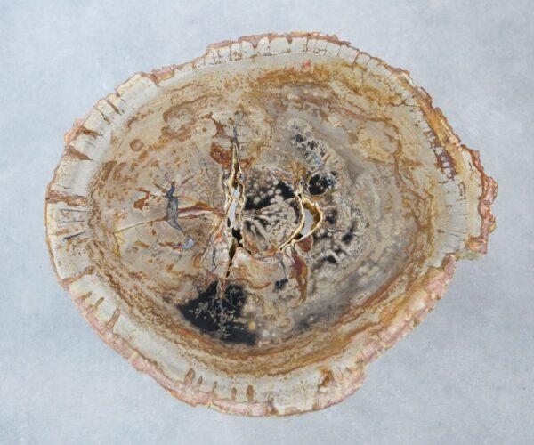 Couchtisch versteinertes Holz 35280
