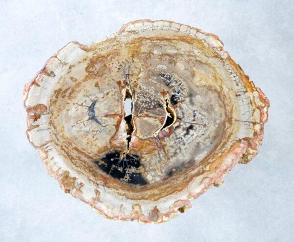 Couchtisch versteinertes Holz 35281