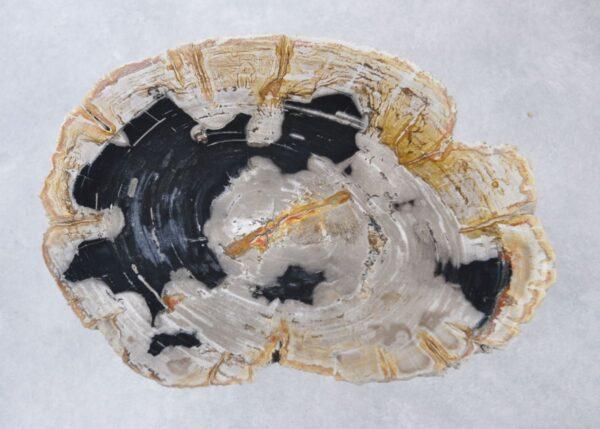 Salontafel versteend hout 35155