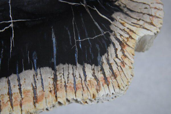 Salontafel versteend hout 35209
