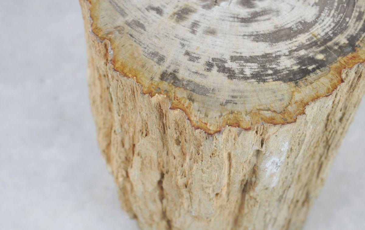 Side table petrified wood 35001