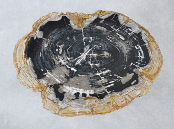 Table basse bois pétrifié 35152