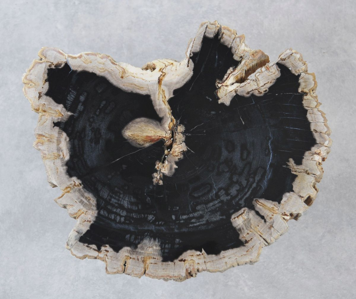 Table basse bois pétrifié 35192