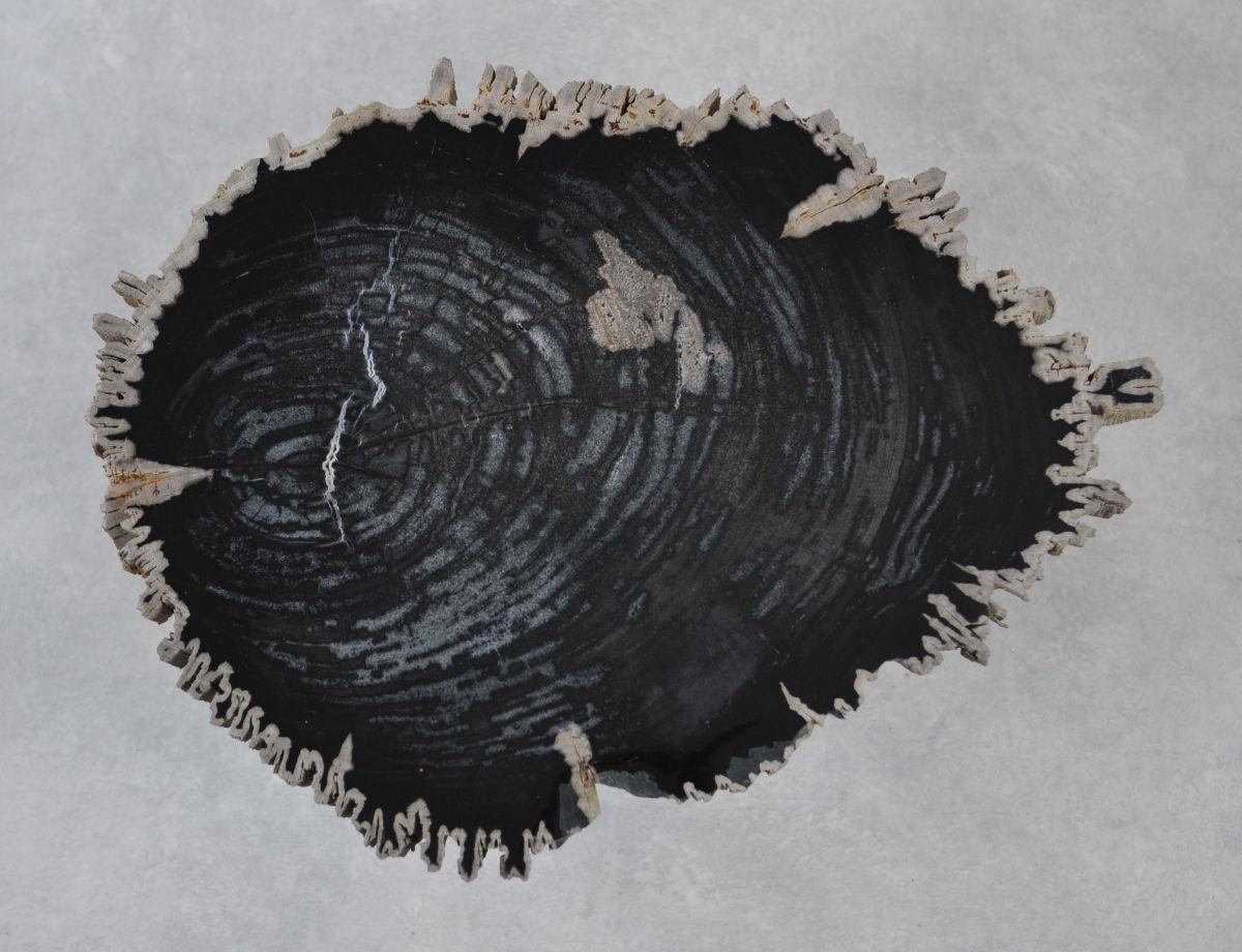 Table basse bois pétrifié 35267