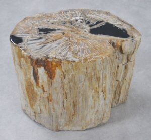 Table d'appoint bois pétrifié 34023
