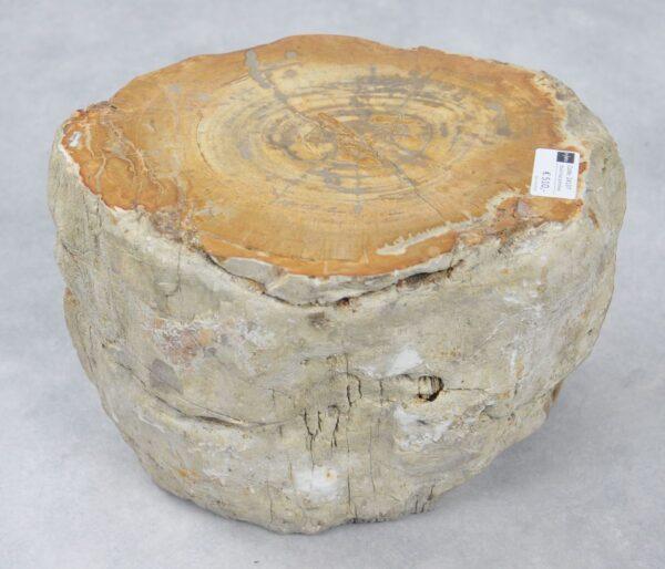Beistelltisch versteinertes Holz 24137
