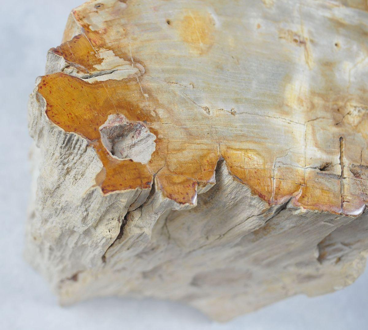 Bijzettafel versteend hout 20361