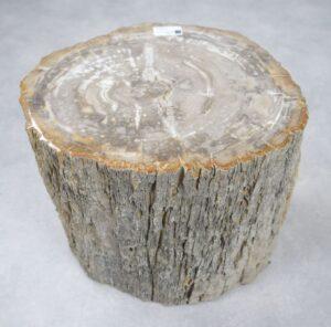 Bijzettafel versteend hout 32585