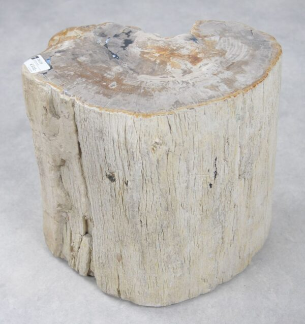 Mesilla madera petrificada 16119