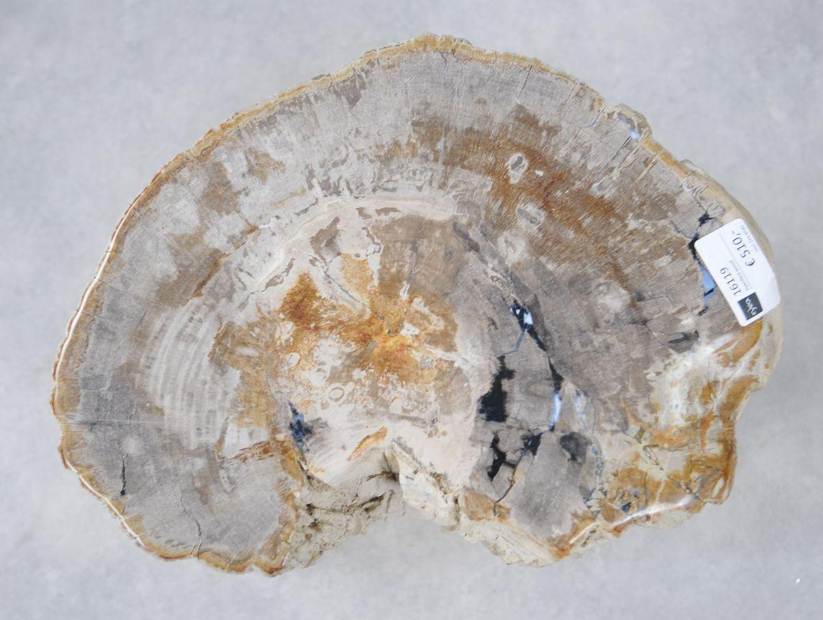 Side table petrified wood 16119
