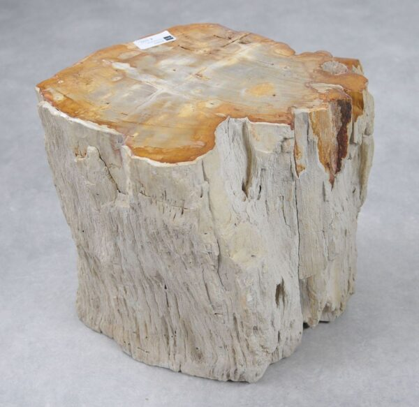Side table petrified wood 20361