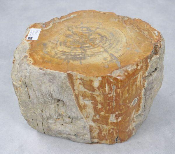 Side table petrified wood 24137