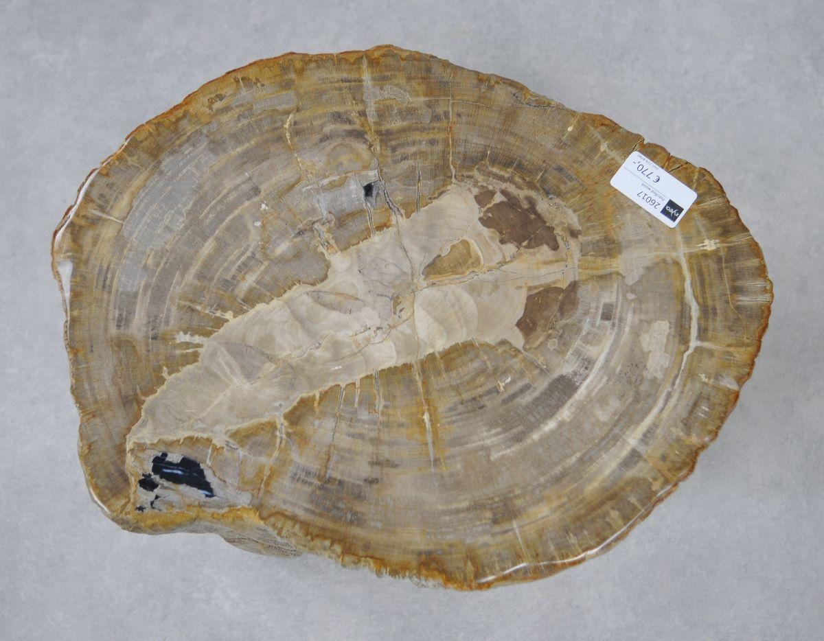 Side table petrified wood 26017