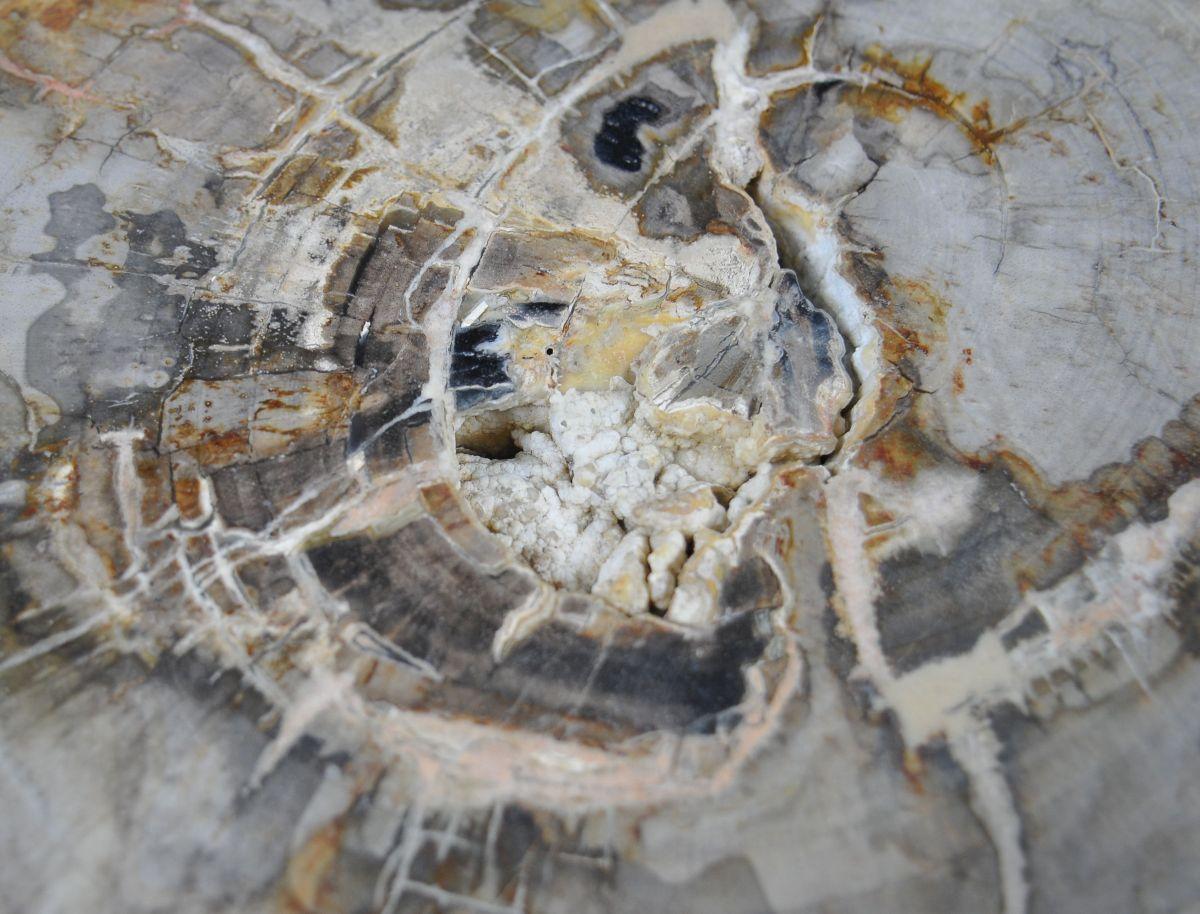 Side table petrified wood 29014