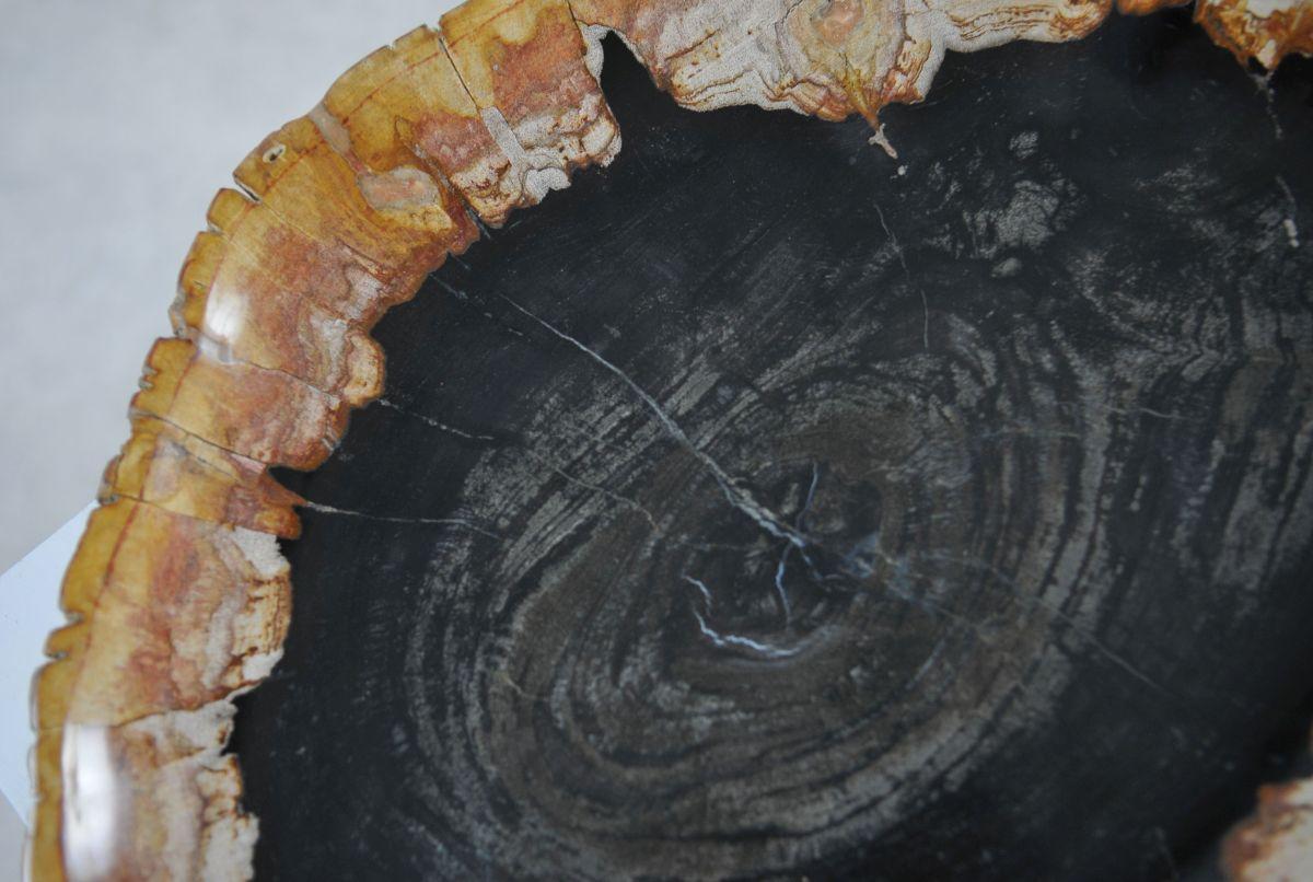 Assiette bois pétrifié 36049a