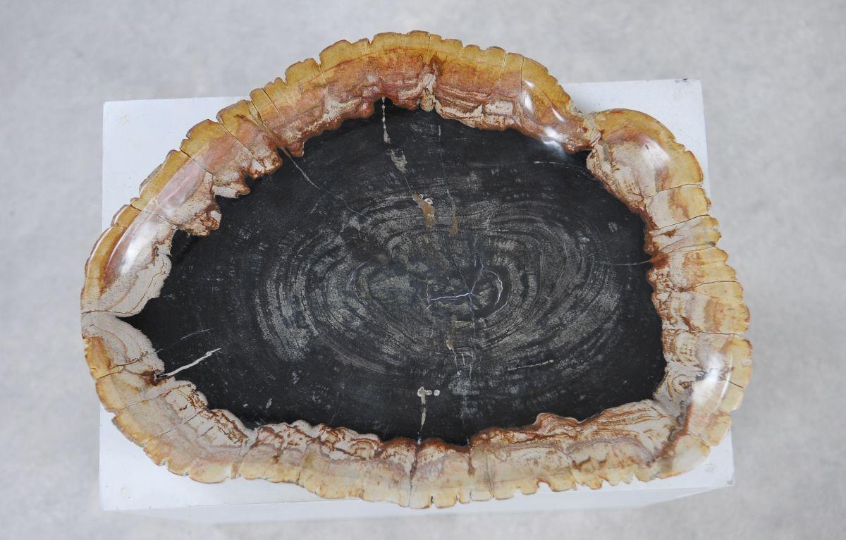 Assiette bois pétrifié 36049l