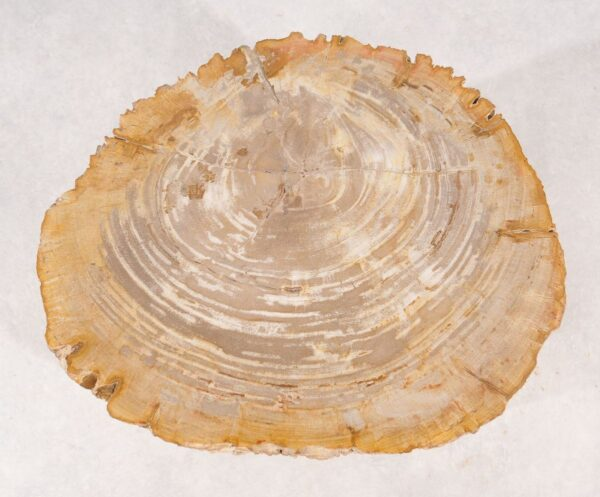 Beistelltisch versteinertes Holz 36011