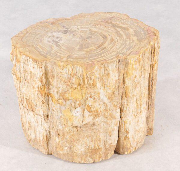Bijzettafel versteend hout 36001
