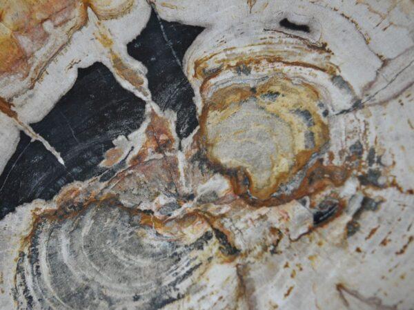 Bord versteend hout 36049g