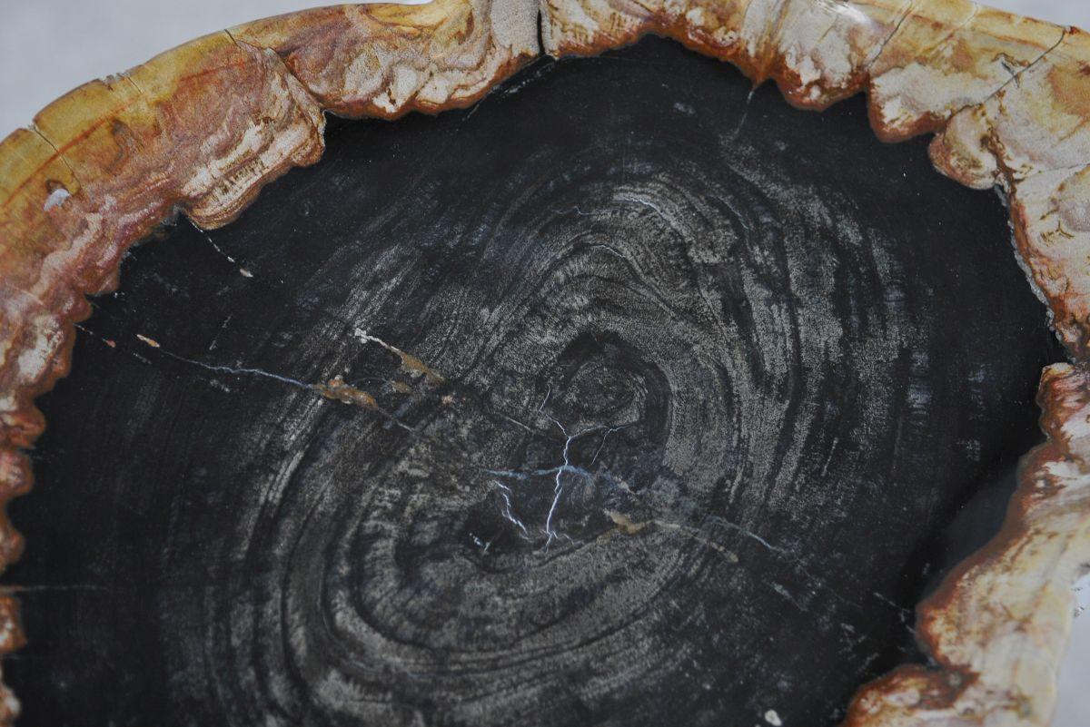 Bord versteend hout 36049h