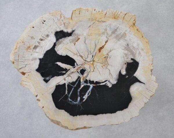 Coffee table petrified wood 36151