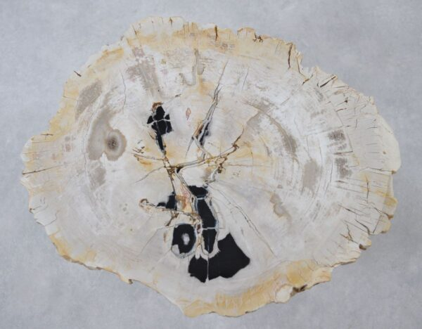 Coffee table petrified wood 36153