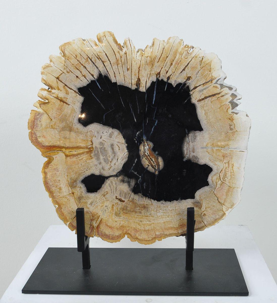 Coffee table petrified wood 36165