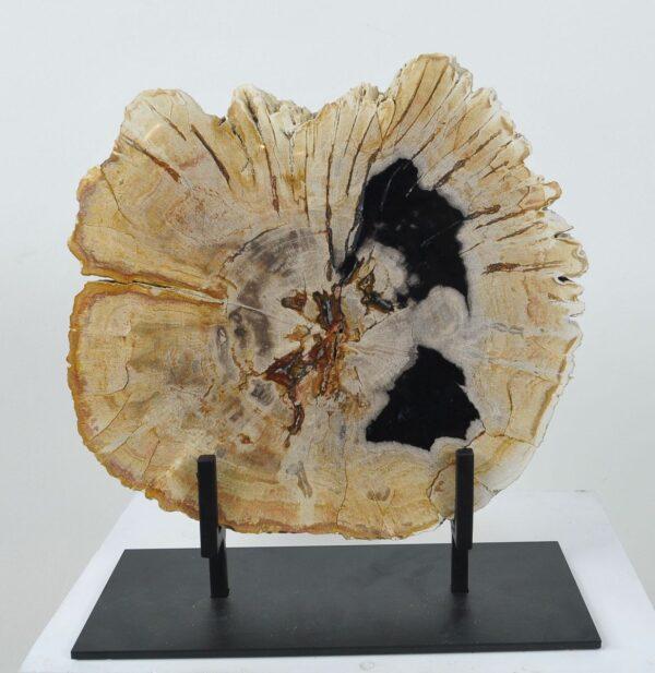 Coffee table petrified wood 36166