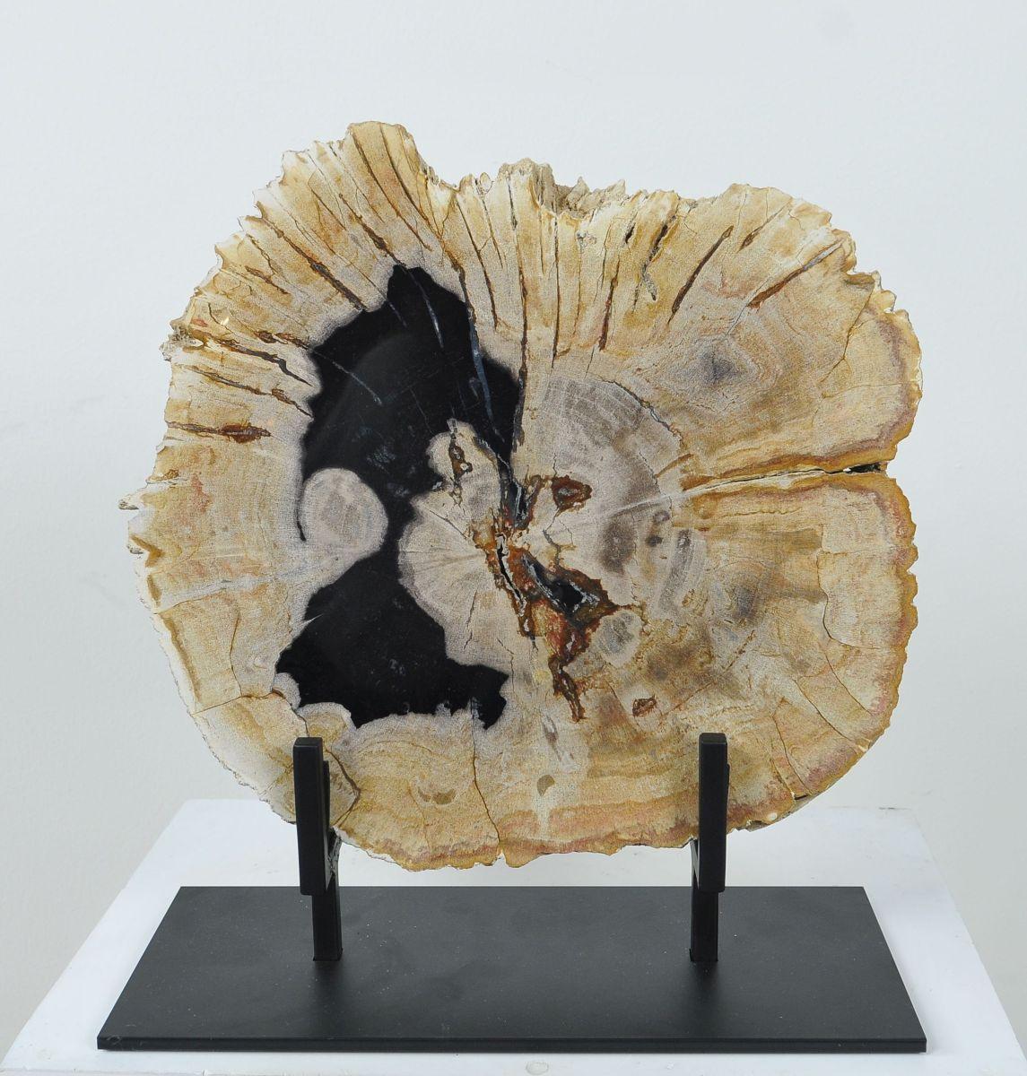 Coffee table petrified wood 36167