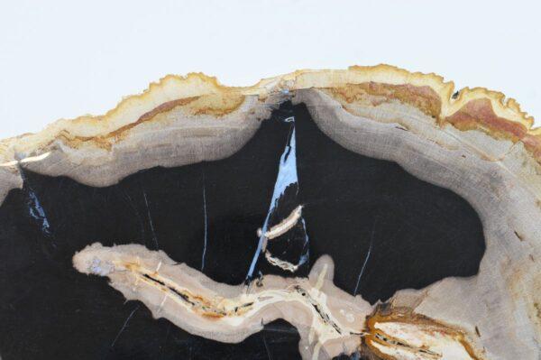 Coffee table petrified wood 36171