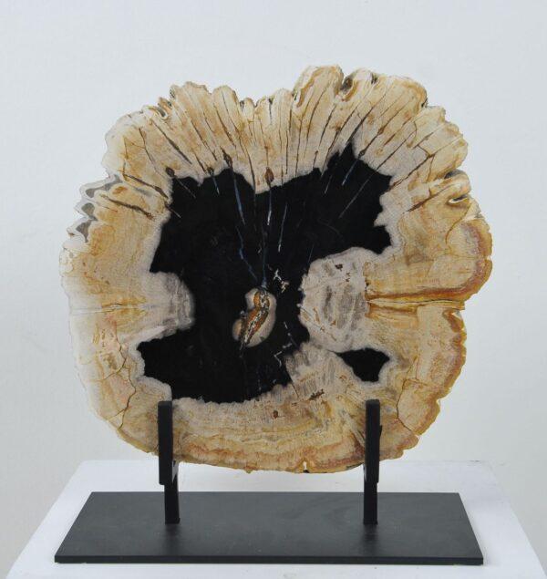 Coffee table petrified wood 36173