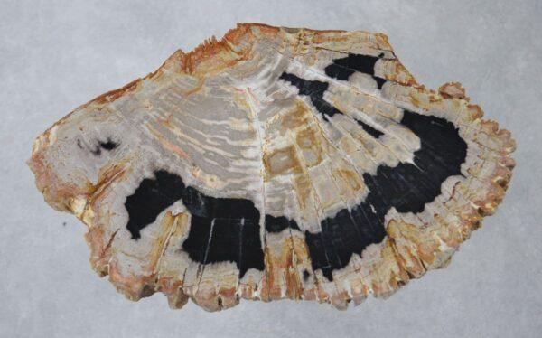 Coffee table petrified wood 36176