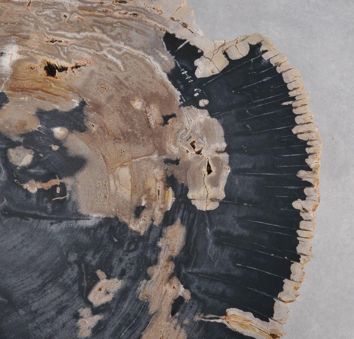 Coffee table petrified wood 36178