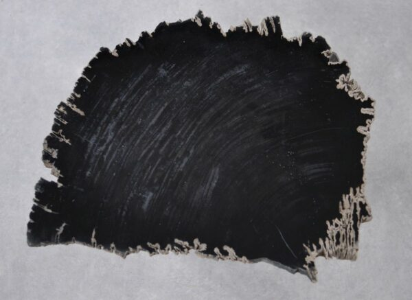Coffee table petrified wood 36202