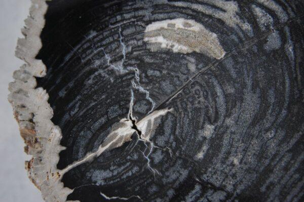 Coffee table petrified wood 36210
