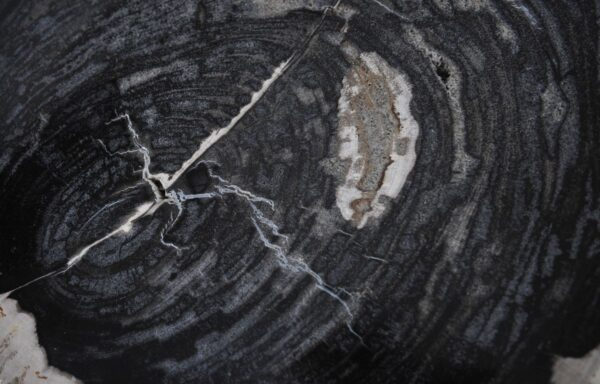 Coffee table petrified wood 36211