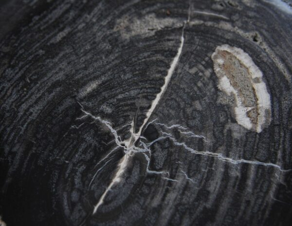 Coffee table petrified wood 36212