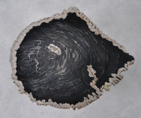 Coffee table petrified wood 36215